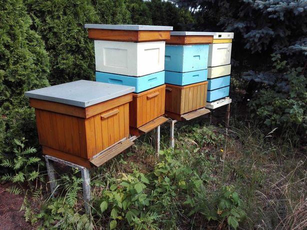 Rodziny pszczele, odkłady - ramka wielkopolska