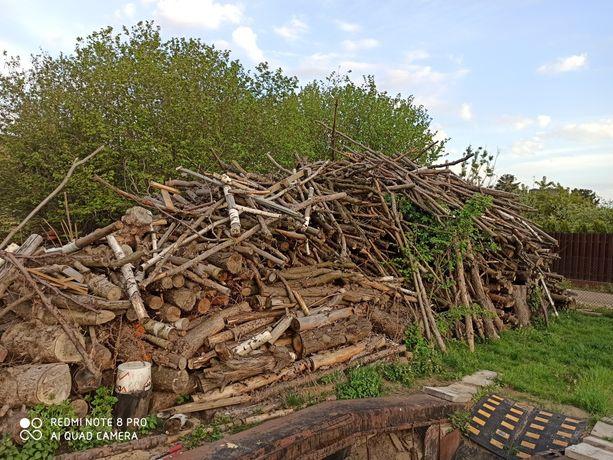 Drzewo sosnowe ,sosna opałowe.  80zl  m. Nie Brzoza, Dąb, Buk, Olcha)