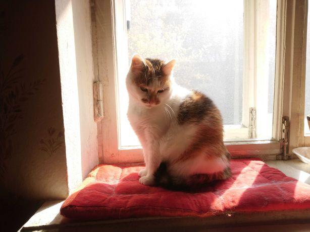 Трехцветная чудо-кошка Маруся, в самые добрые руки, 6 лет
