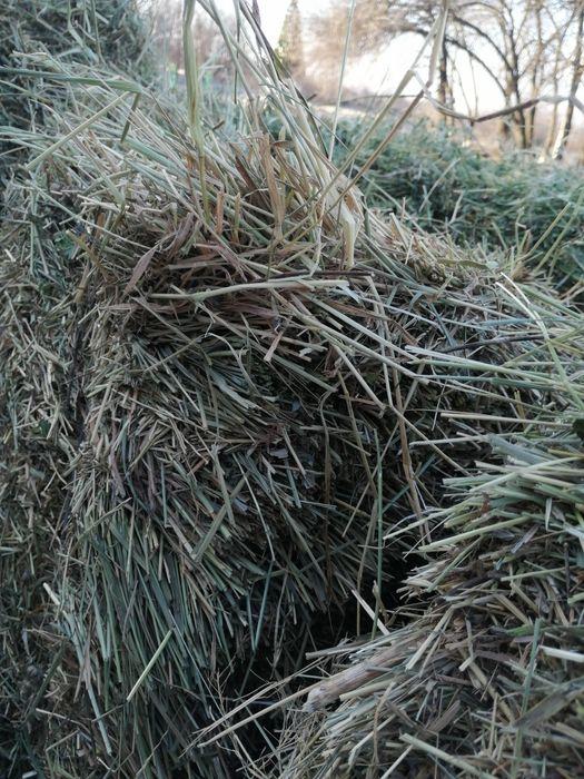 Продам сено в тюках Михайло-Лукашево - изображение 1