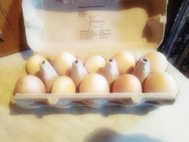 Jaja lengowe 3zl kochim olbrzymi