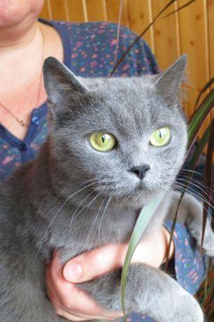 Джесси ждет | Дымчатая нежная кошечка | 1 годик, кошка, котенок, кот