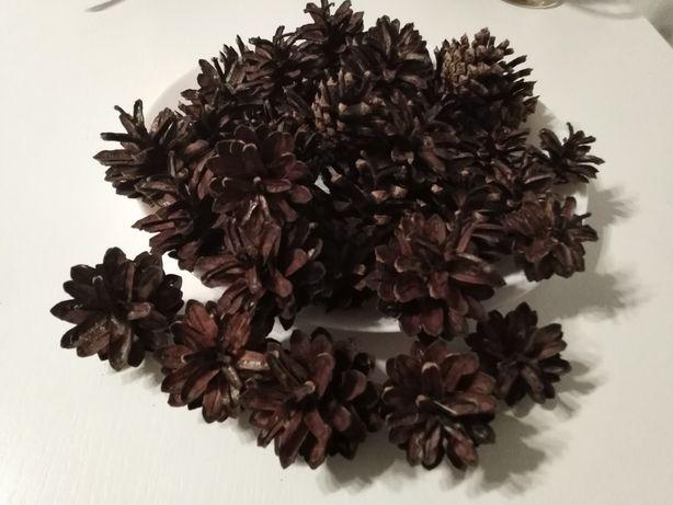 Szyszki sosny 4-6 cm