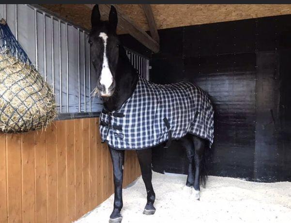 Pensjonat dla koni - WOLNE BOKSY