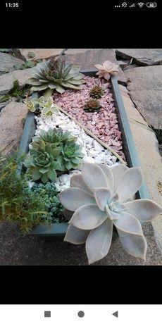 Сукуленти, рослини для альпійської гірки