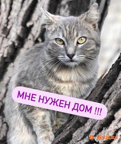 кошка Ариша ищет дом