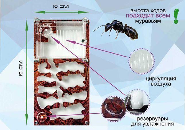 "Муравьиная ферма формикарий Smart ""дерево"" для Жнецов Messor Struktor"