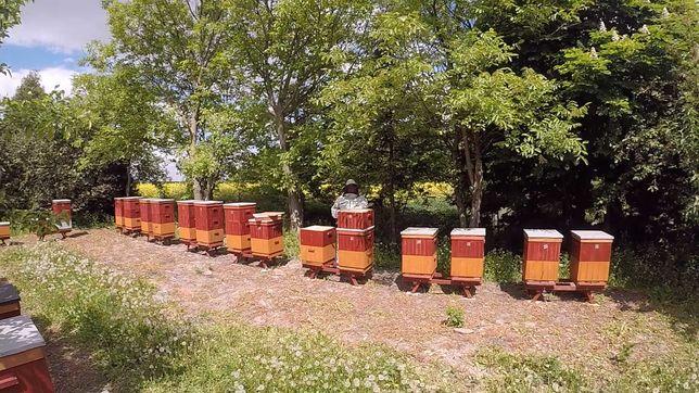 Rodziny, pszczoły, Stojaki dębowe, Wosk pszczeli, Ule ul