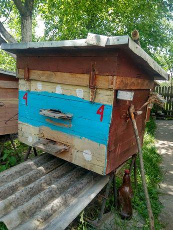 Продаю бджоли, вулики