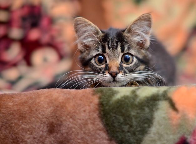 Услуги ветеринара на дому