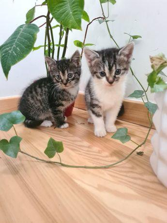 Male kotki szukają domu