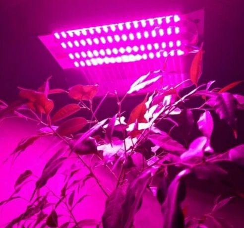 Фитолампа /фитопрожектор для растений 50 вт