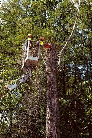 Wycinka drzew, frezowanie karp, usługi alpinistyczne