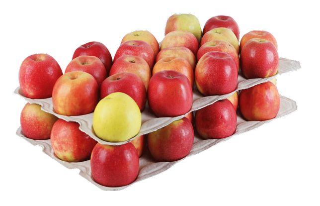 Wytłoczki do bushla podkładki do jabłek wytłoczki celulozowe