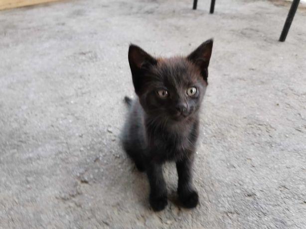 Oddam kotka w dobre ręce!!