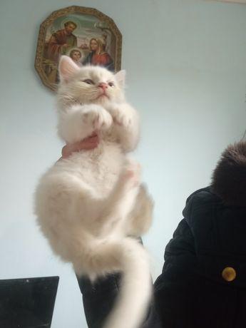 Котик, кошеня 3 міс