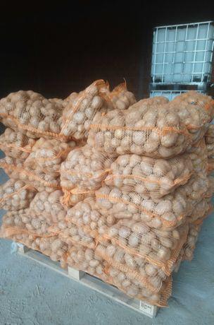 Ziemniaki Jadalne Vineta Tajfun