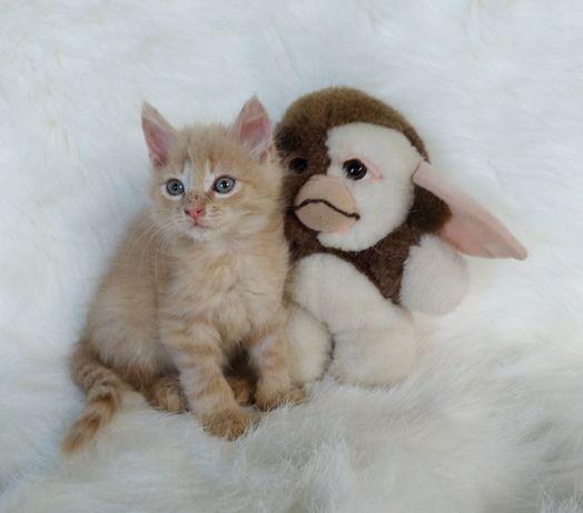 Милейший котенок Боб 1.5 мес. В поиске нового дома.