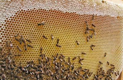 Пчелосемьи, продам пчел, харьковская обл. пасека, пчелы