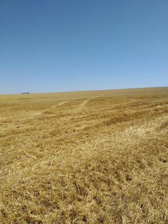 Продажа земли сельскохозяйственного назначения
