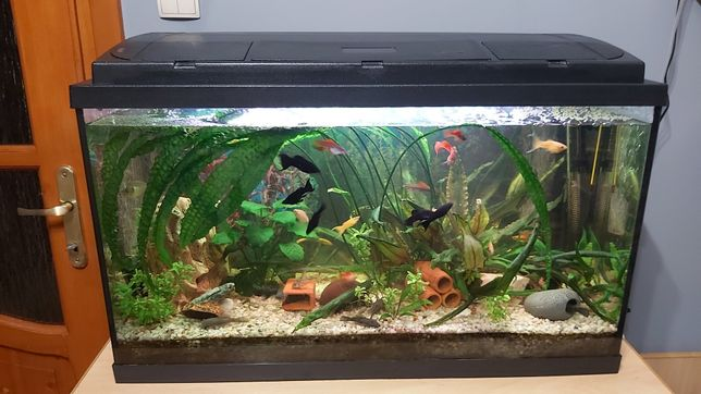 Akwarium 126 litrów