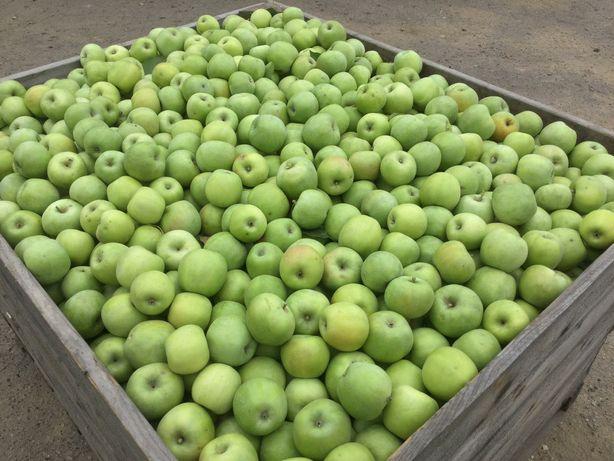 Продам яблоки опт - розница.