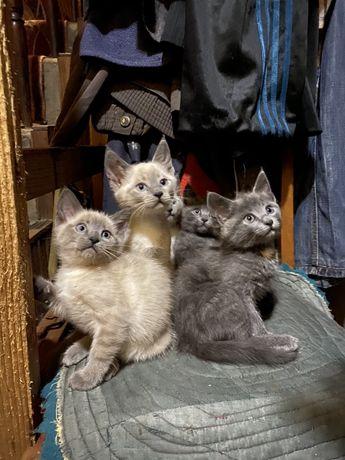 Продам котенят