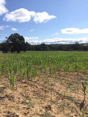 Excelente terreno com 3 ha agrícola/construção