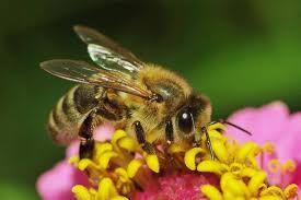 Продам бджолосім*ї