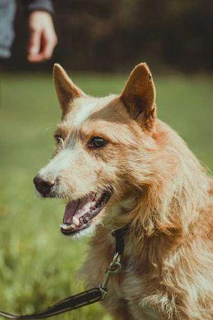 Szagi- psi przystojniak szuka domu