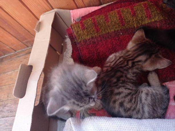 Котики 2 безкоштовно