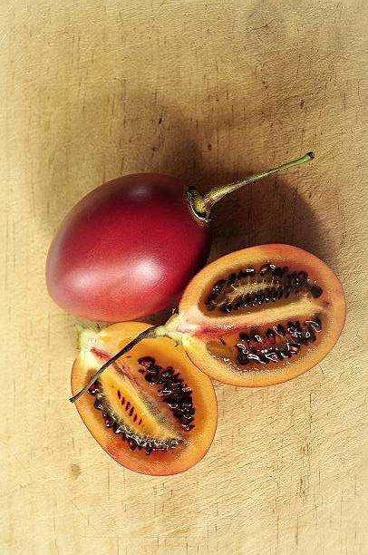 Planta de Tamarilho roxo Biologico