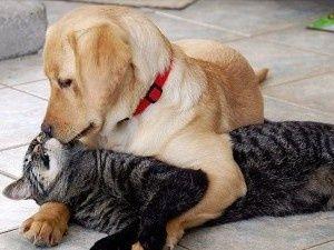 Вызов ветеринара на дом(Киев и область)