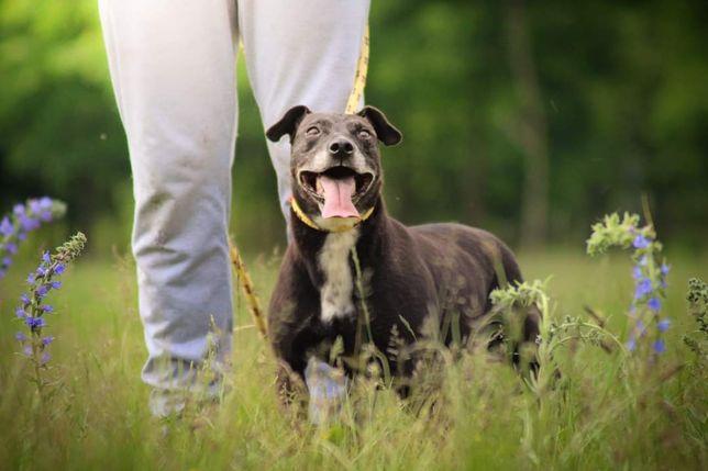 Cudowna,radosna, zawsze uśmiechnięta Zorka tak długo czeka na dom!