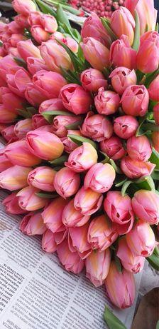 Луковицы тюльпанов, лилий после выгонки