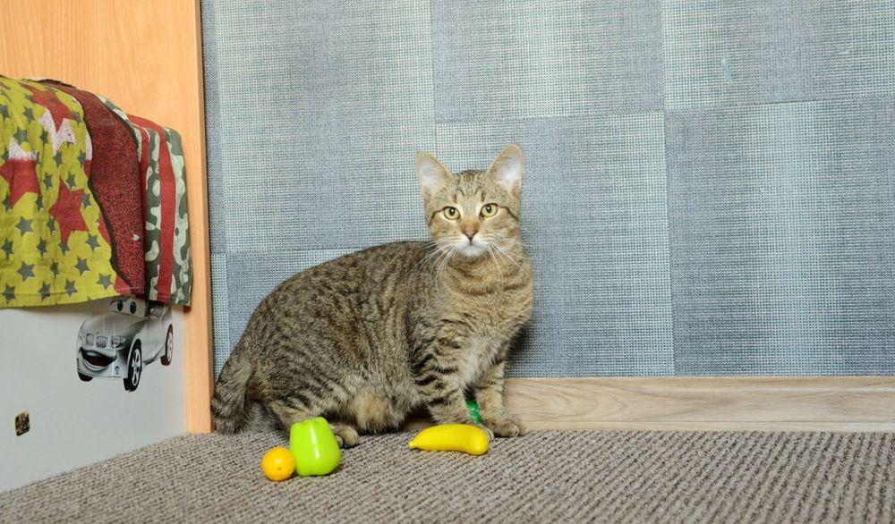 Полосатый красавец кот Киев - изображение 1