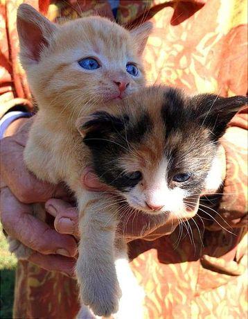 Котята, нереально красивые малыши, ищут новый дом!