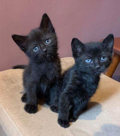 Кошечка и котик 1.5 мес в добрые руки