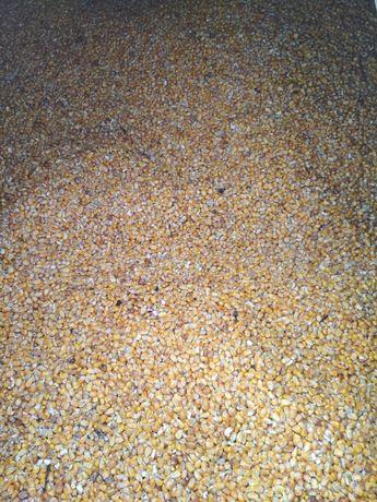 kukurydza mielona lub luzem