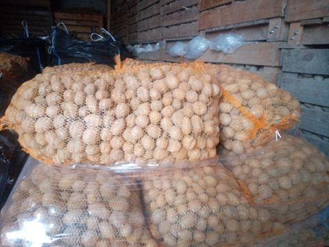 ,Ziemniaki paszowe , odpadow
