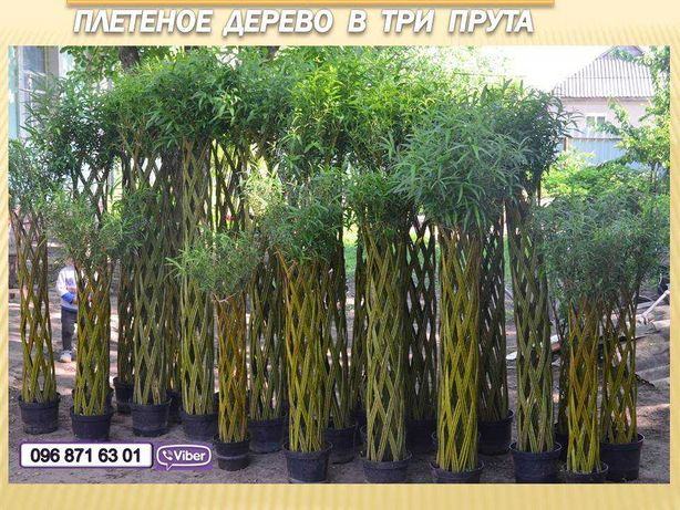 Плетеная ива Плетеные деревья Датские корни