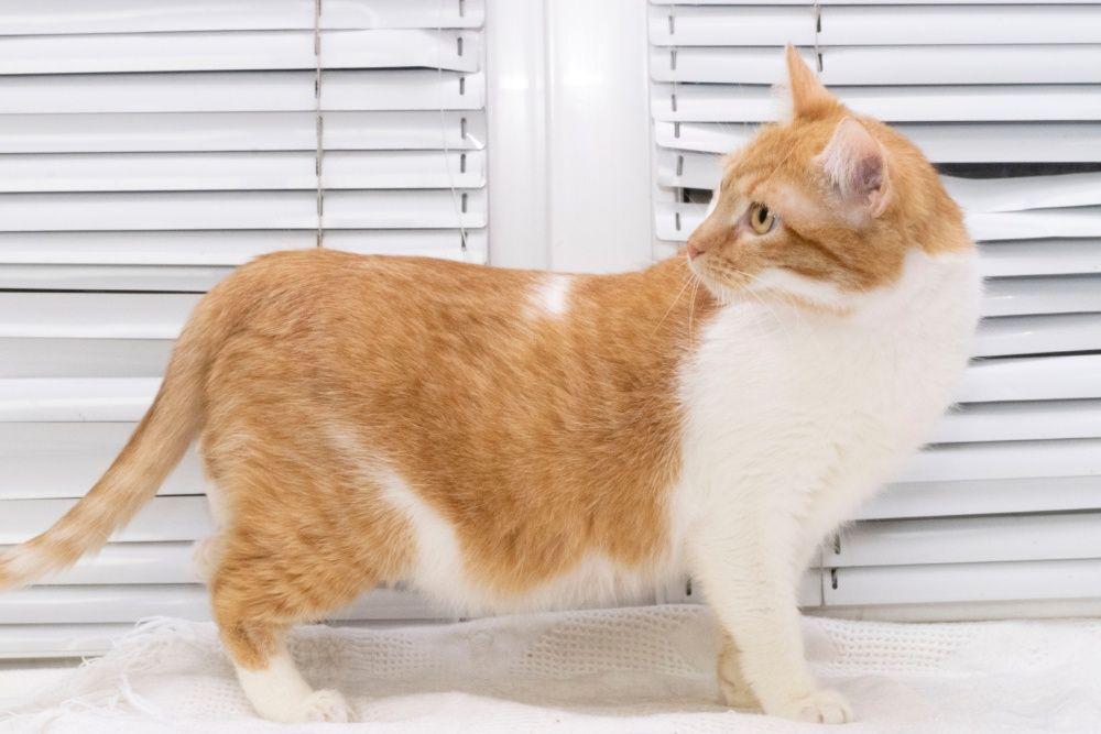 молоденький котик Адик ( 1 год) добрый, трусишка, кастрирован