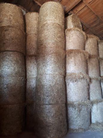 sprzedam siano suche ze stodoły cena z transportem  zapraszam