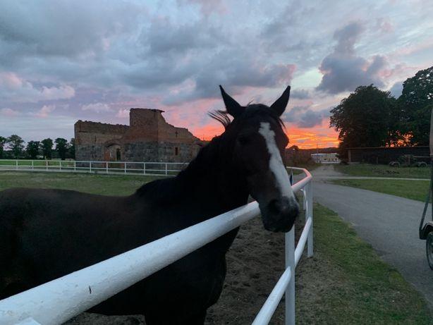 Pensjonat/Hotel dla koni