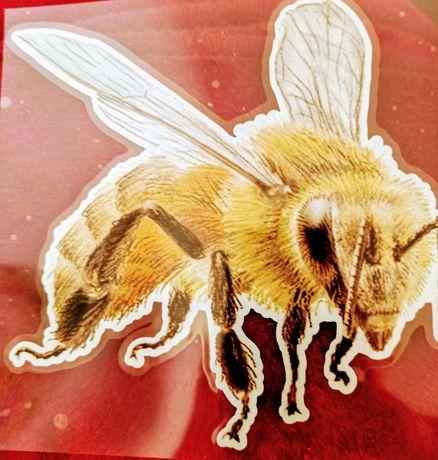 Pszczoły do apitoksynoterapi