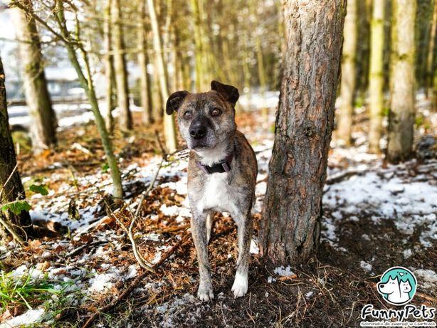 Pies ideał, spokojny i grzeczny Florek poleca się do adopcji!
