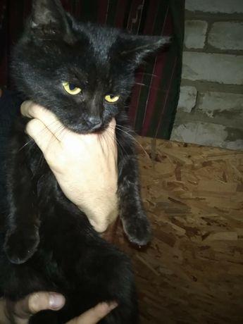 Отдам в добрые руки Кошку