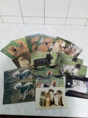 Продам открытки животных