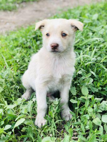 Красавчик щенок Бемби мальчик