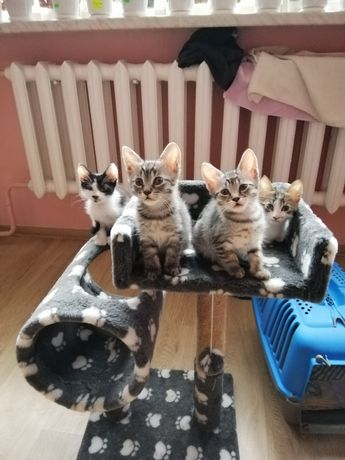 Кошенята у добрі руки!)